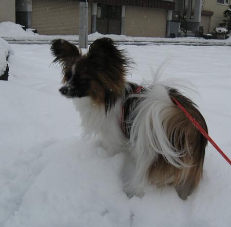春の雪71.jpg